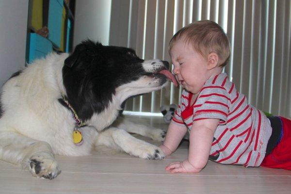 Лучшая собака для ребенка 32