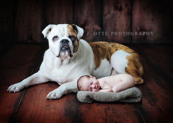 фото собак и детей 2