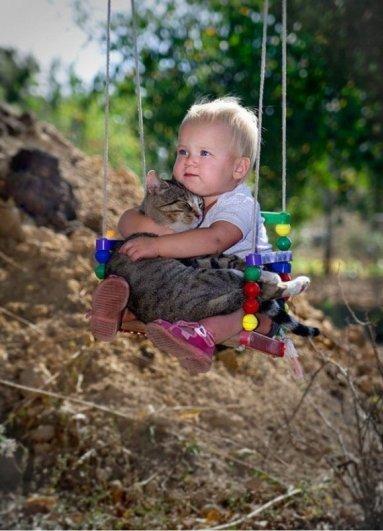 Милые кошки