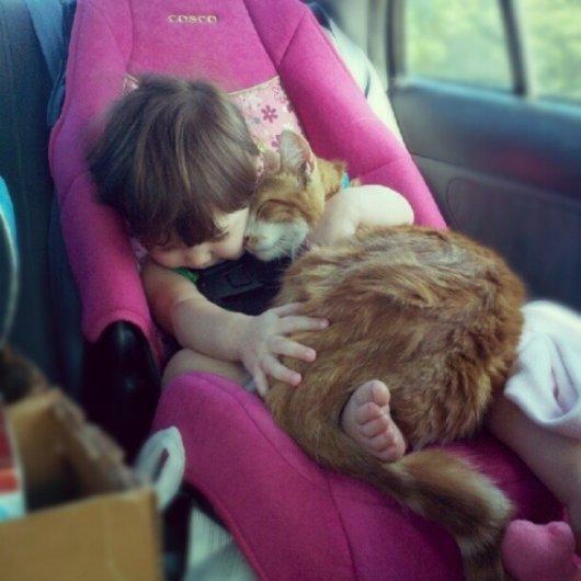 милые кошки картинки