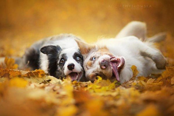 домашние питомцы собаки