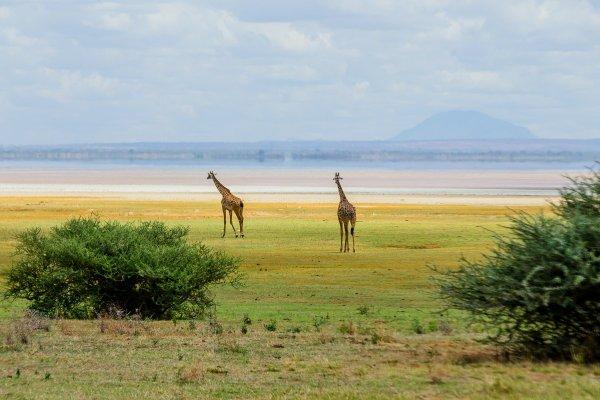 Моё путешествие по национальным паркам Танзании... - №10
