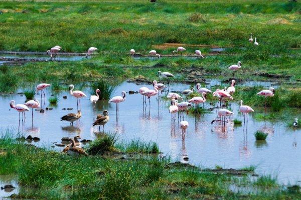 Моё путешествие по национальным паркам Танзании... - №14