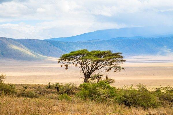 Моё путешествие по национальным паркам Танзании... - №18