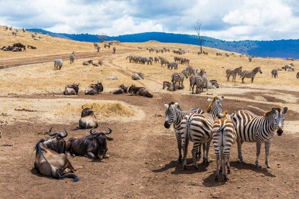 Моё путешествие по национальным паркам Танзании... - №22