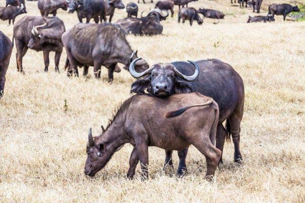 Моё путешествие по национальным паркам Танзании... - №26