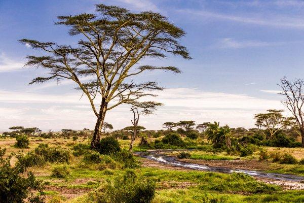 Моё путешествие по национальным паркам Танзании... - №34