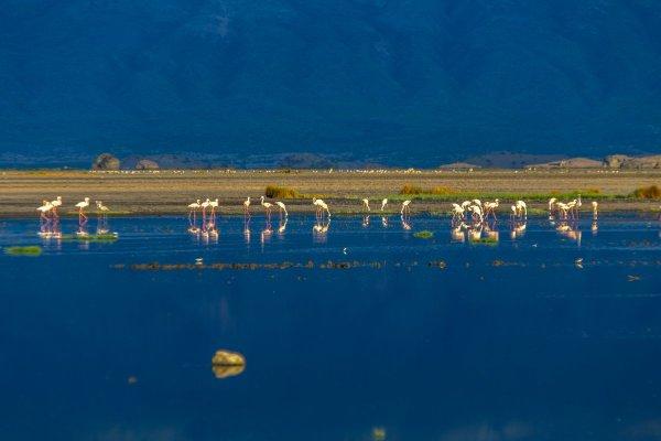 Моё путешествие по национальным паркам Танзании... - №46