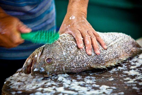 hands-fish