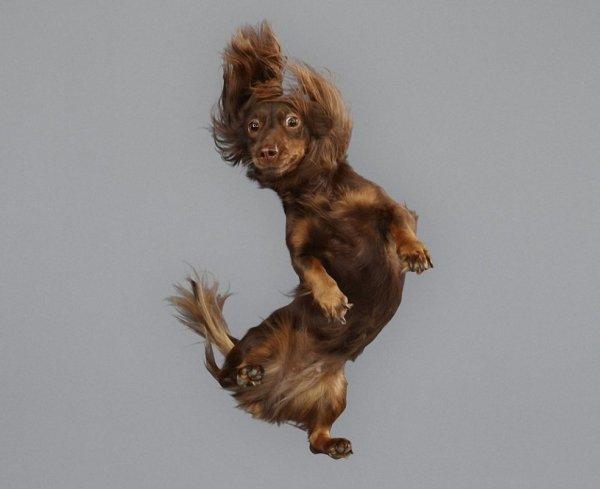 летающие собаки фото