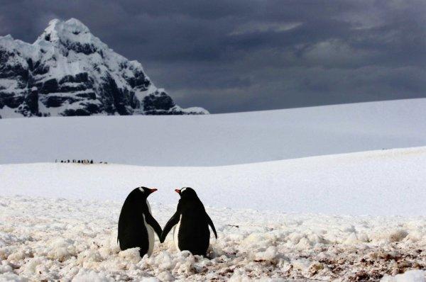 Пингвины на фото